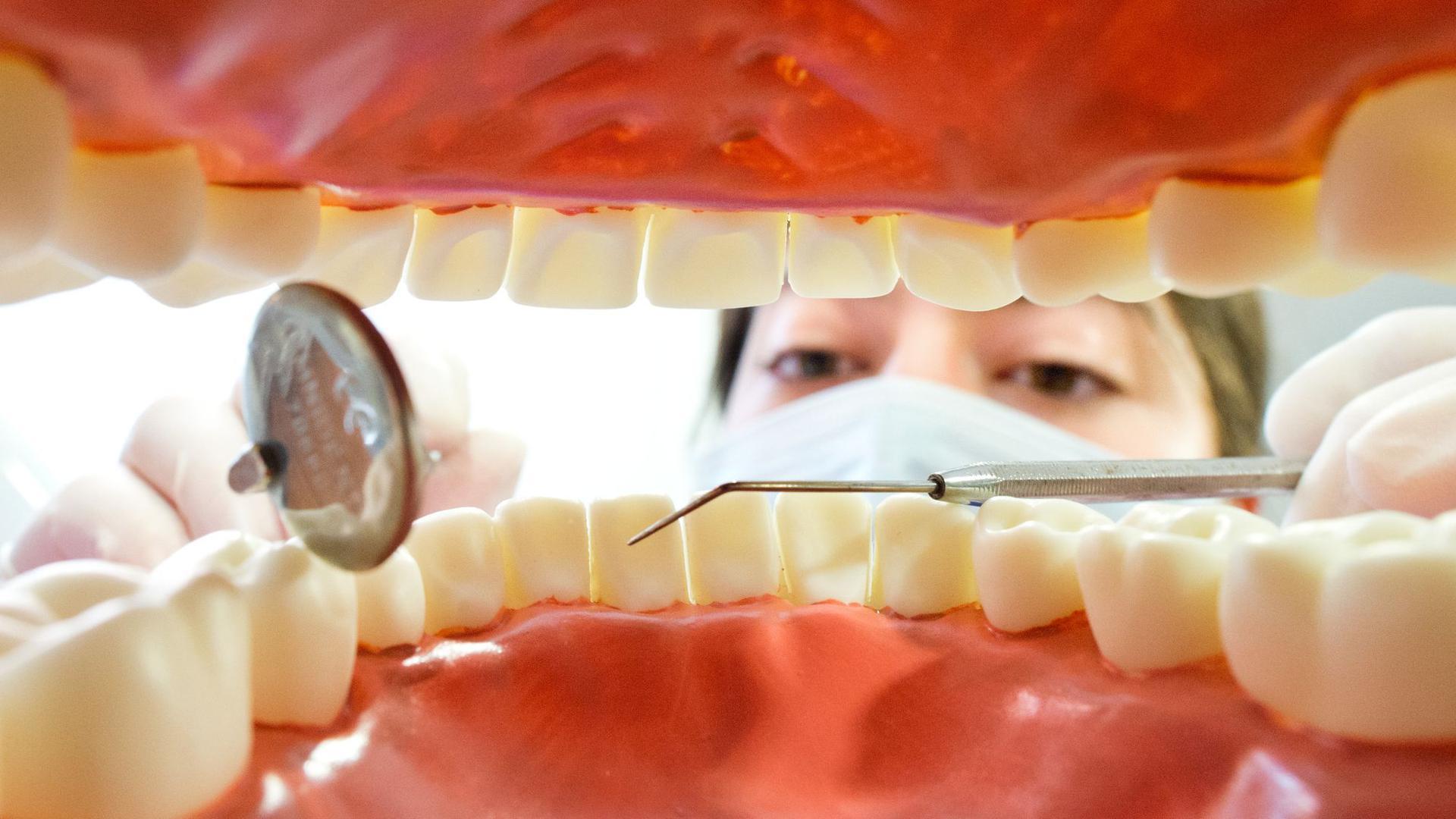 Eine Zahnarzthelferin hinter einem künstlichen Gebiss.