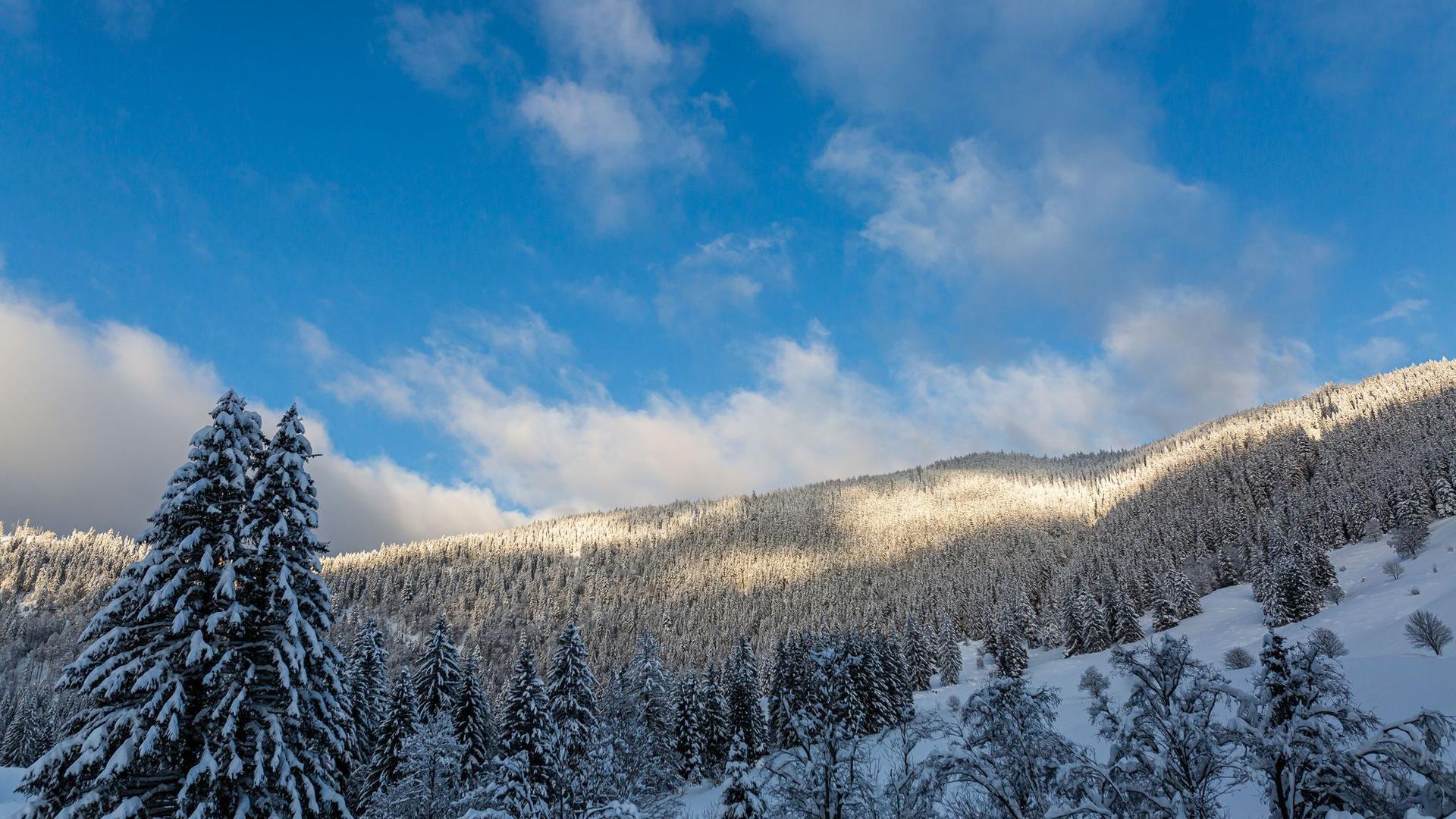 Tief verschneite Bäume stehen an den Hängen rund um den Ort Menzenschwand nahe St. Blasien.