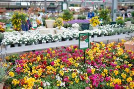 Kunden kaufen in einem Gartencenter ein.