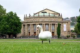 Ein Schwan steht vor dem Opernhaus in Stuttgart.