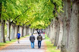 Herbstliche Farben in einer Allee in Hannover.