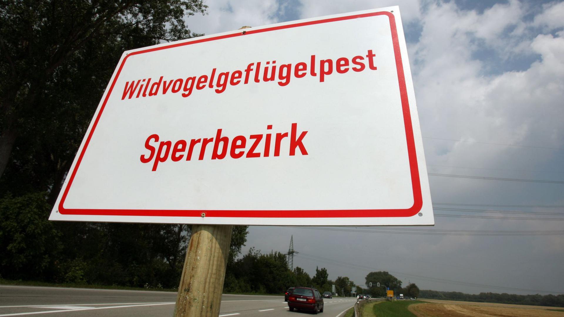 Nach vier Jahren ist erneut ein Fall von Geflügelpest in Berlin nachgewiesen worden.