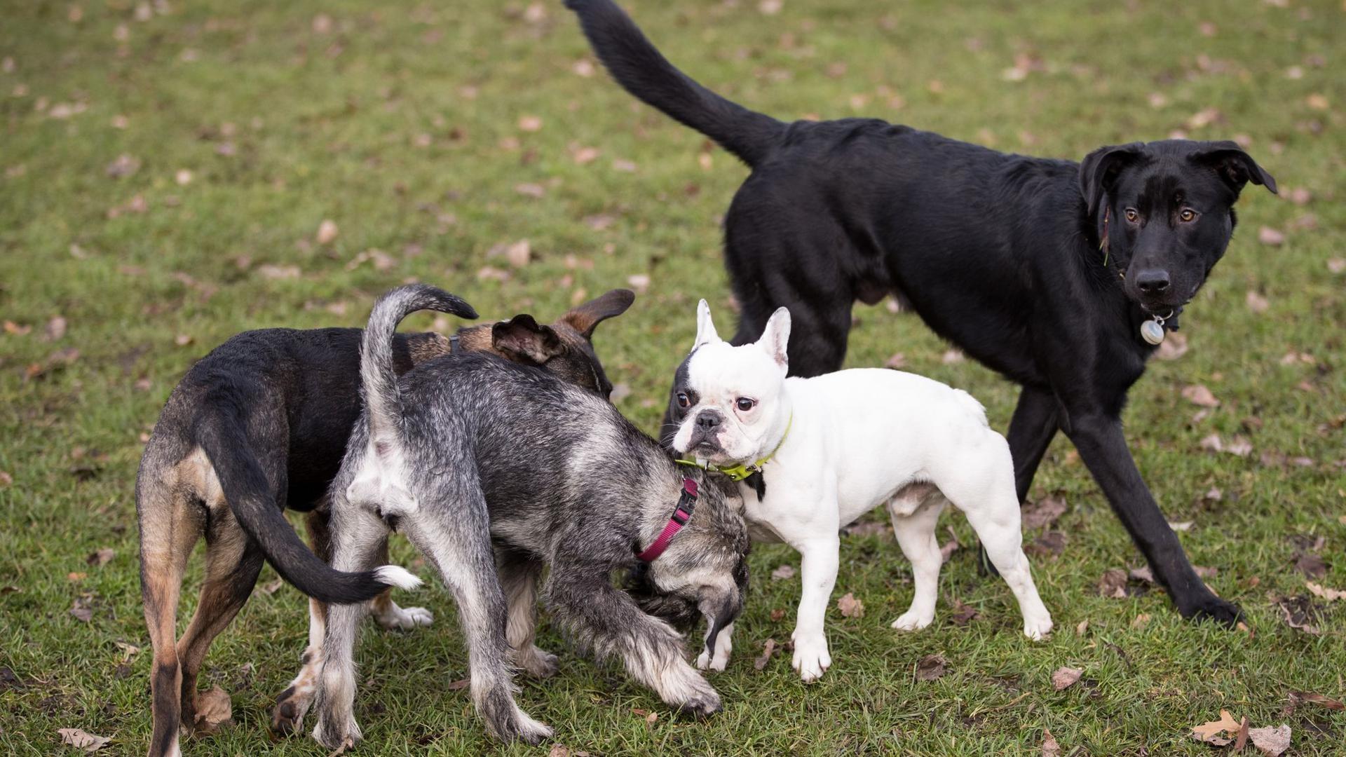 In der Corona-Pandemie ist die Nachfrage nach Hunden extrem angestiegen.