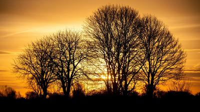 Im niedersächsischen Hemmingen geht die Sonne hinter Bäumen auf.