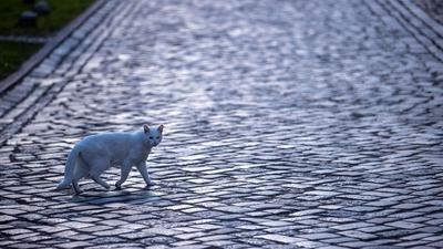 Katze mit Gefühlen: Die britische Regierung will das Land zum Vorreiter bei Tierrechten machen. (Symbolbild)