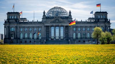 Löwenzahn blüht auf der Wiese vor dem Reichstagsgebäude in der Morgensonne. (Archivbild)