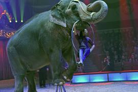 Jana Mandana Lacey-Krone mit Elefantendame Bara während eines Auftritts im Circus Krone.