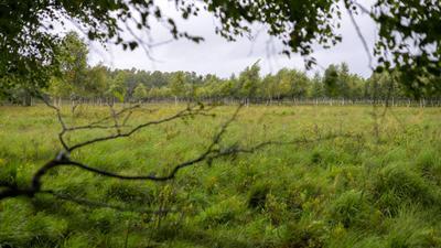 Ein Moor in Schleswig-Holstein.