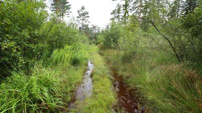Ein vom Regen überschwemmter Waldweg im Degermoos. Das Moor im Allgäu an der Grenze von Baden-Württemberg und Bayern wurde über Jahrzehnte immer weiter ausgetrocknet.