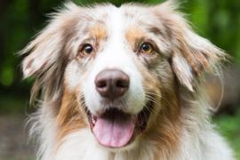 2,7 Prozent mehr Hundesteuer gab's 2020 für Deutschlands Städte und Gemeinden.