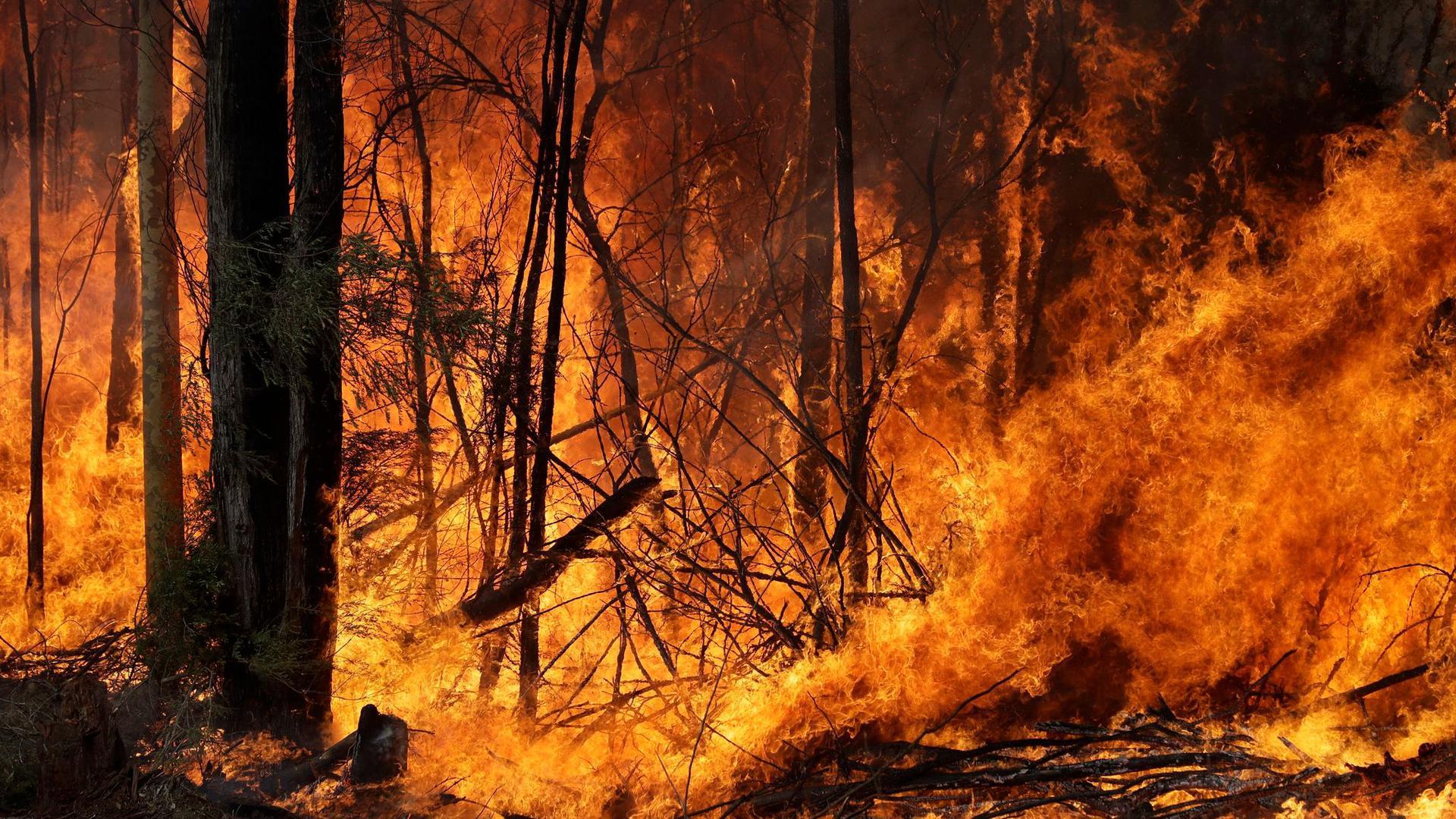 Waldbrände - wie hier in Australien - und andere Naturereignisse gefährden vor allem Menschen, die nicht sozial abgesichert sind.