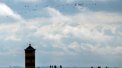 Gänse fliegen über den Pilsumer Leuchtturm.