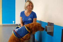 Richtiger Riecher: Christelle Schreiber trainiert mit Hund Pokaa. Der Rüde kann Coronavirus-Infektionen bei Personen erschnüffeln.