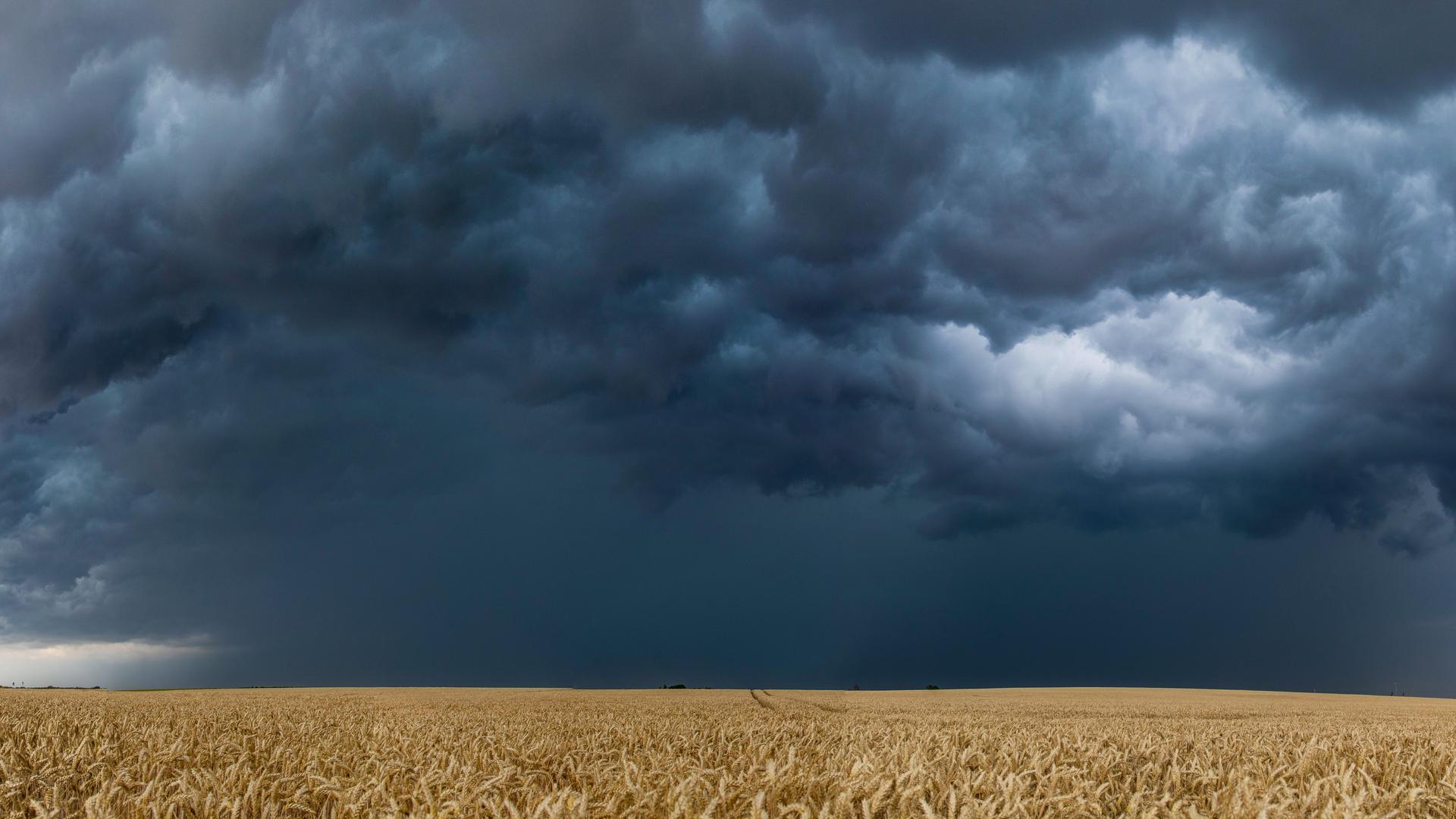 Dichte Gewitterwolken ziehen über ein Weizenfeld. +++ dpa-Bildfunk +++