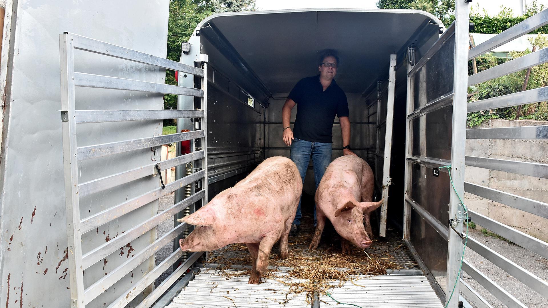 Der letzte Gang: Auch für die Schweine von Markus Klatz vom Ettlinger Hedwigshof endet das Leben beim Metzger.