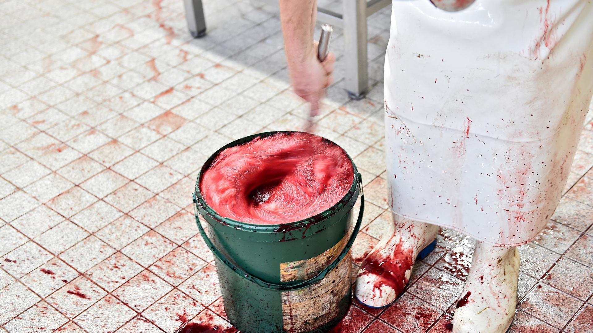 Blut ist Rohstoff: Das Blut der Tiere wird aufgefangen und weiter verarbeitet.