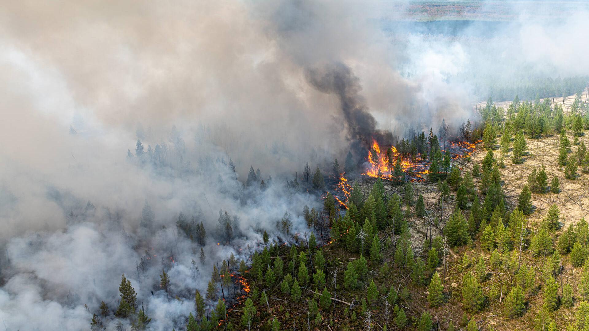 Die Arktis erlebt einen extremen Sommer: Im russischen Norden brennen riesige Waldflächen. Wissenschaftler halten die Klimaerwärmung für eine wahrscheinliche Ursache der Naturkatastrophe.