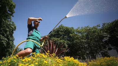 Der Garten- und Landschaftsbauer Salvatore gießt ein Blumenbeet.