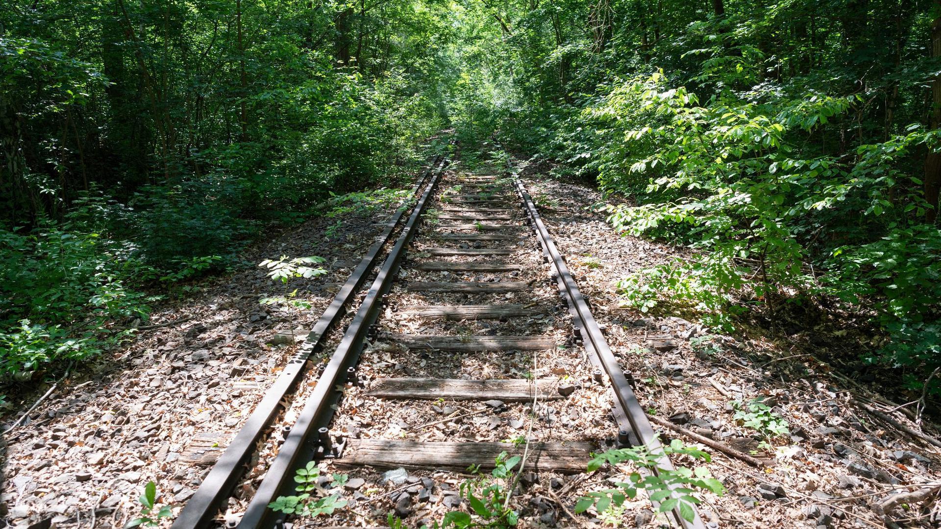 Teilweise zugewachsene Bahnschienen der Potsdamer Stammbahn bei Kleinmachnow.