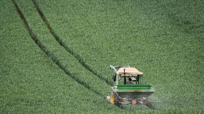 Mit dem Düngerstreuer am Traktor fährt ein Landwirt im Main-Kinzig-Kreis über ein noch grünes Getreidefeld.