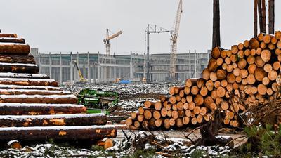 Abgeholzte Kiefernstämme liegen auf dem Baugelände der Tesla Gigafactory östlich von Berlin.