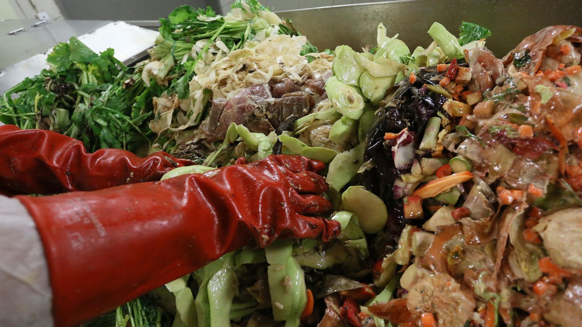 Der Mitarbeiter eines Recycling-Unternehmens prüft Speisereste auf Fremdstoffe wie Kunststoffe oder Papier.