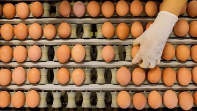 Eier aus Freilandhaltung werden wegen der Geflügelpest Mangelware.