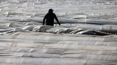 Ein Erntehelfer deckt nach einem Erntedurchgang den Spargel mit Plastikfolie ab.