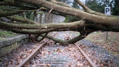 Auf den Gleisen im Stadtteil Münster - Gremmendorf liegt ein umgestürzter Baum. Die Deutsche Bahn stellt sich auf extremere Wetterverhältnisse ein.