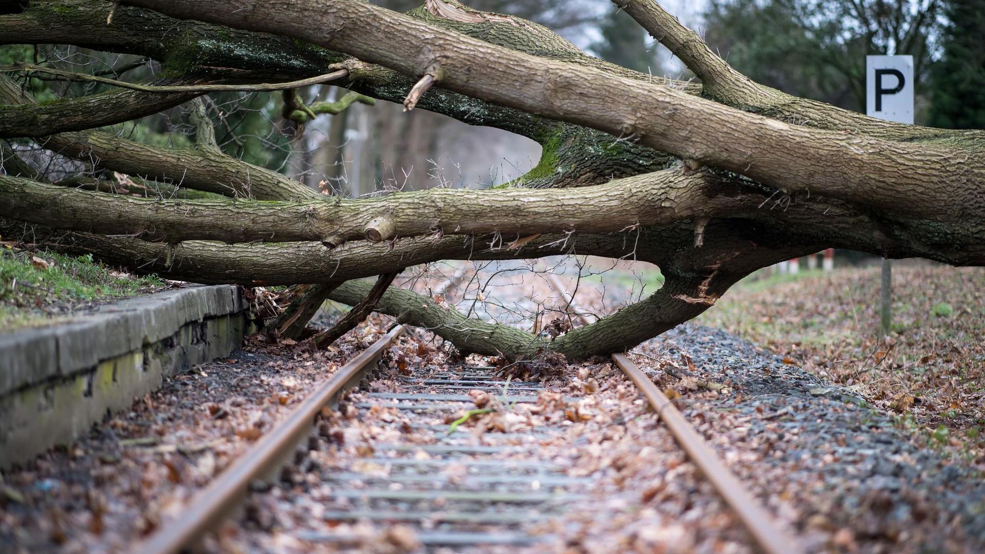 Das Archivfoto zeigt einen umgestürzten Baum auf einem Bahngleis in Münster.