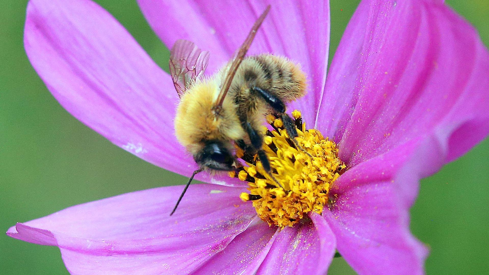 Zusätzliche Gebiete sollen unter besonderen Schutz gestellt werden, die wichtige Lebensräume für Insekten sind.