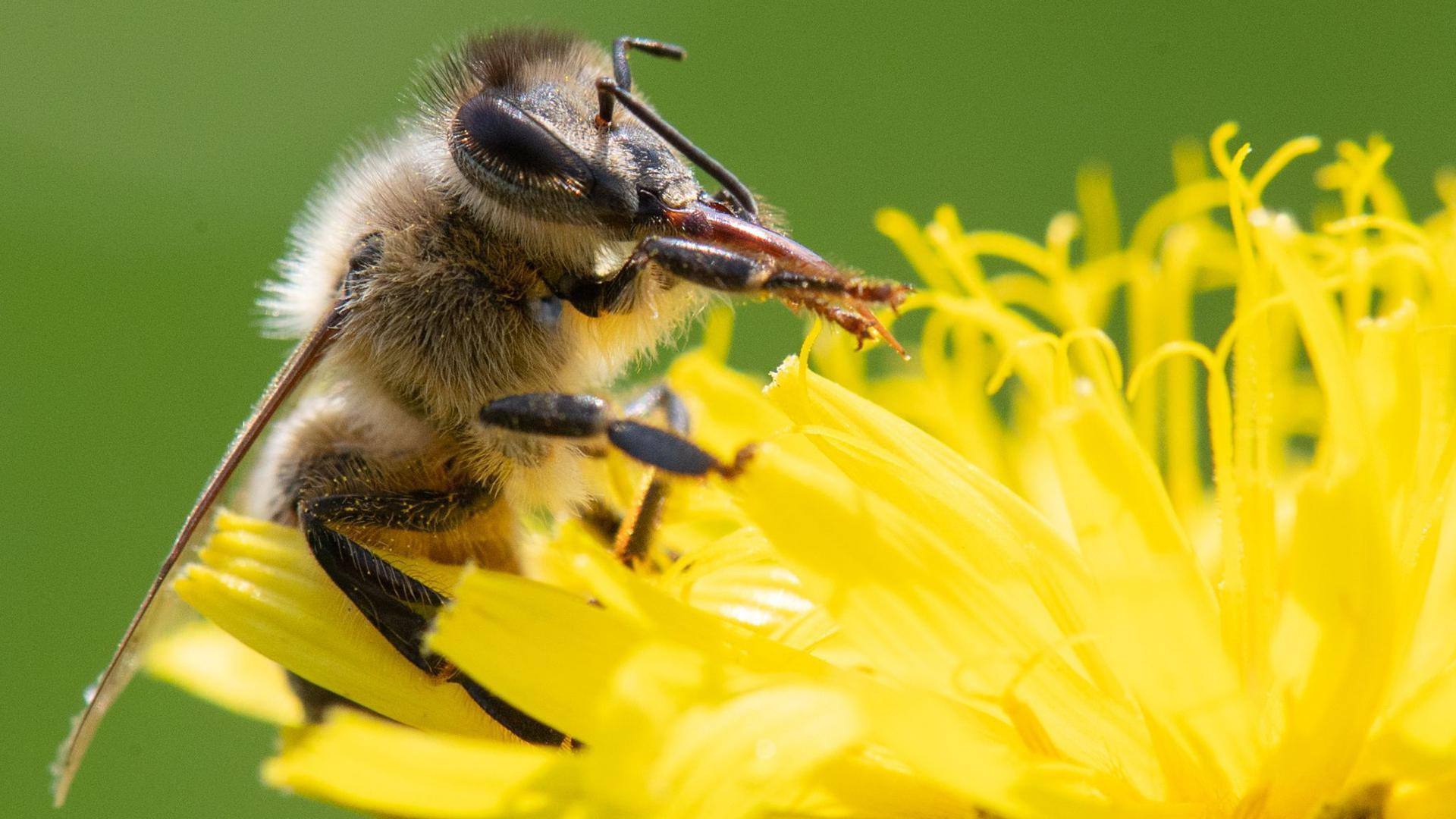 Der Einsatz von Pestiziden in der Landwirtschaft wird zum Schutz bedrohter Insekten weiter eingeschränkt.