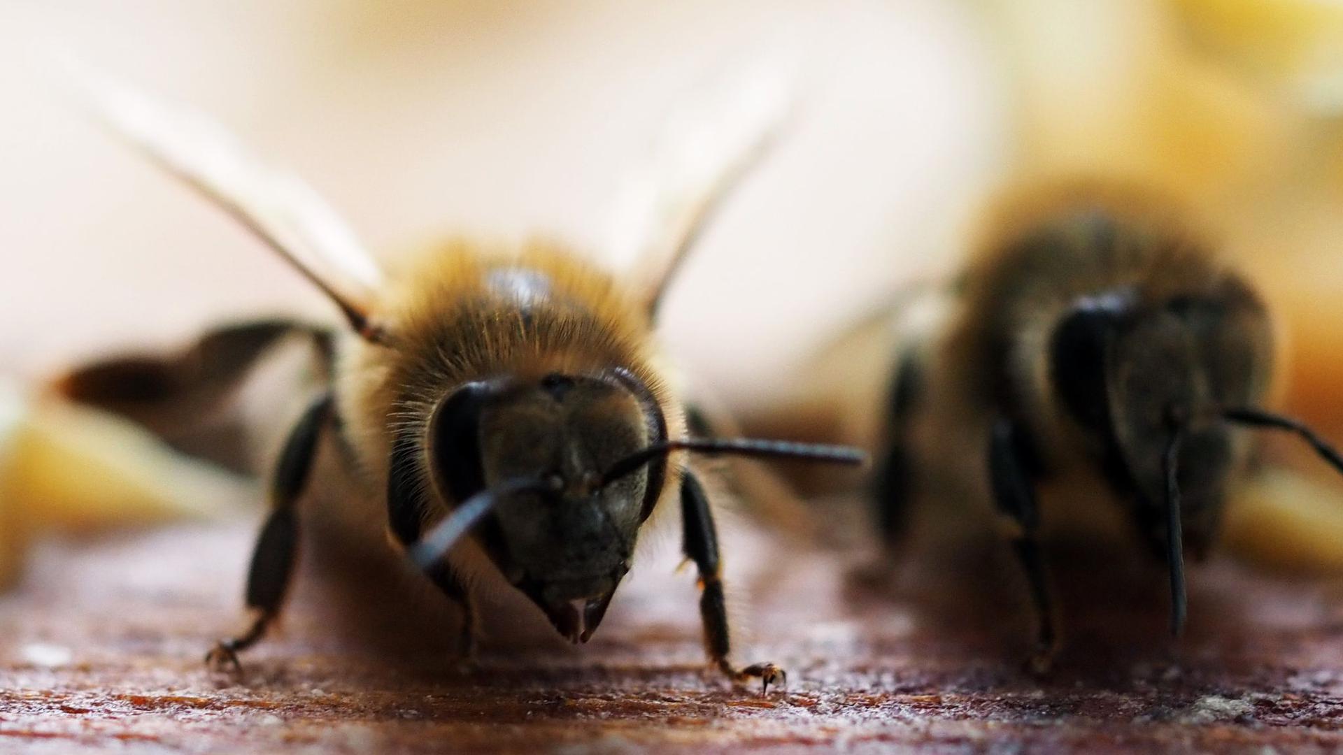 Beim Bienenschutz geht es konkret um einen Schwellenwert für bestimmte Chemikalien, die in der Landwirtschaft eingesetzt werden.