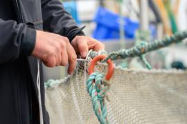 Werden die überfischten Weltmeere nicht bald geschont, droht ein Kollaps der Fischbestände.