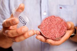 """Professor Mark Post von der Universität Maastricht zeigt bei einer Produktpräsentation in London """"Laborfleisch"""" aus der Petrischale."""