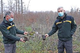 Zwei Männer mit Mundschutz halten zwei Setzlinge in die Luft, die sie auf einer Waldlichtung verbuddel wollen.