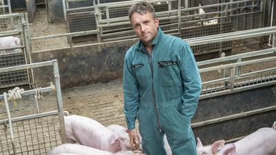 Landwirt Ulrich Hauser steht inmitten von Ferkeln