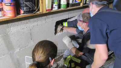 Katzenrettung aus Mauerspalt