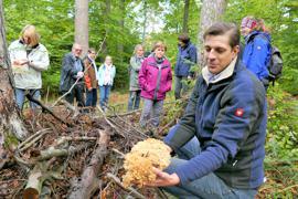 Mann hält einen schwammähnlichen Pilz in der Hand