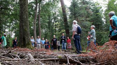 Führung durch den Wald mit Markus Haller.