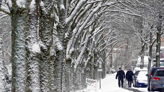 Allee mit Schnee: In Büchenbronn verwandelte der Schnee die Bäume und Straßen in eine bilderbuchmäßige Winterlandschaft.