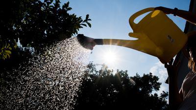 Eine Frau steht mit einer Gießkanne in einem Garten und gießt Pflanzen.