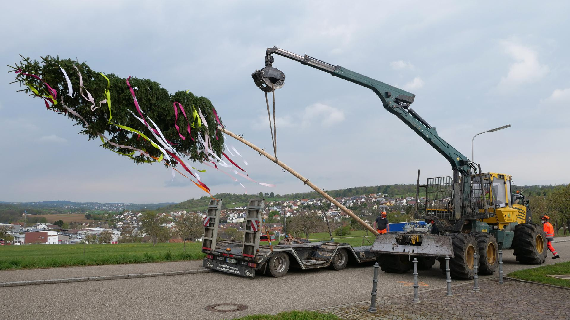In Niefern-Öschelbronn wurden die Maibäume am Donnerstagmorgen aufgestellt - hier vor der Steighalle