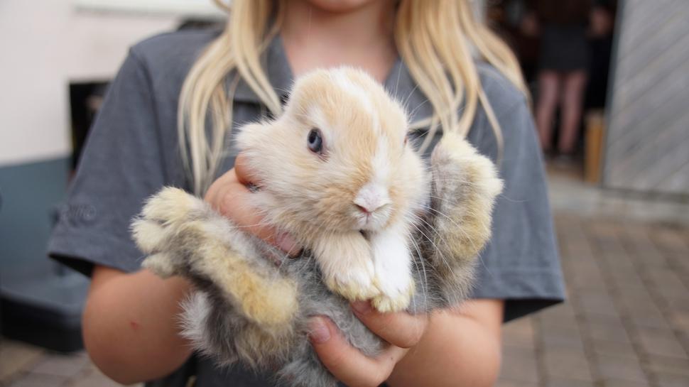 Ein heller Hase wird von einem Mädchen gehalten.