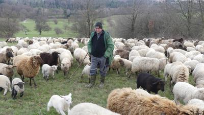 Seit 30 Jahren ist Mario Nagel aus Karlsbad-Spielberg passionierter Schäfer. In den Wintermonaten ist er mit seinen rund 500 Mutterschafen und ihren Lämmern auf der Winterweide in der Region unterwegs. Hier dieser Tage auf den Wiesen zwischen Ittersbach und Weiler.