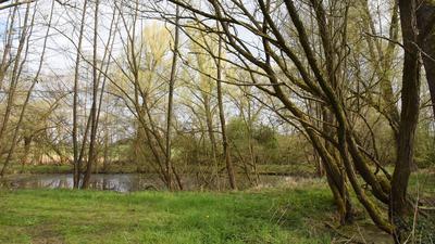 Der Gemeinderat beschloss Angebote für die Erstellung eines Biotopverbundplanes einzuholen. Im Bild ein bereits vernetztes Biotop am westlichen Ortseingang von Ellmendingen.