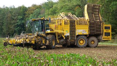 In Königsbach-Stein wurden am Mittwoch die Zuckerrüben gerodet. Zum Einsatz kam dabei ein Fahrzeug der Zuckerrübenrodegemeinschaft, das voraussichtlich bis Ende des Jahres im südwestdeutschen Raum unterwegs ist.