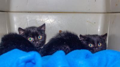 Diese beiden jungen Katzen hat die Feuerwehr Neulingen am Samstagabend aus einem Kanal gerettet.