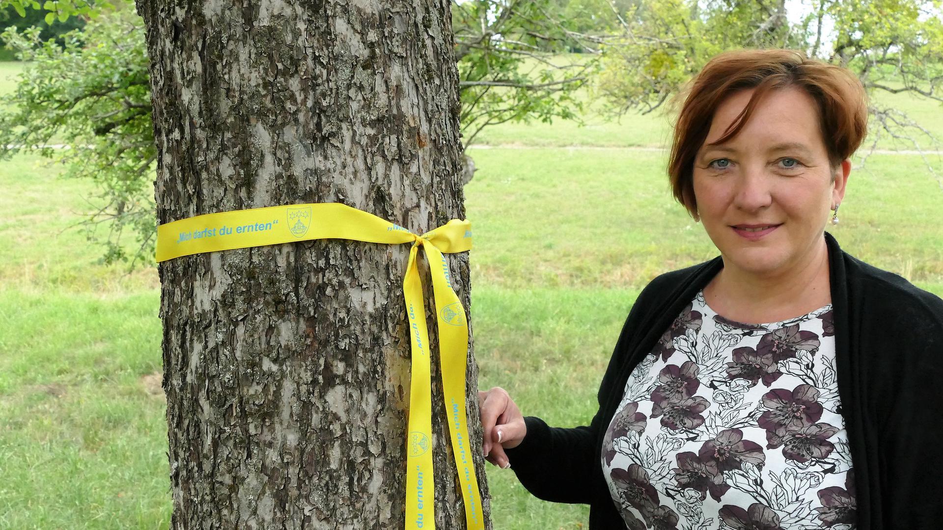 Silke Engelsberger bringt ein Gelbes Band an einem Apfelbaum an