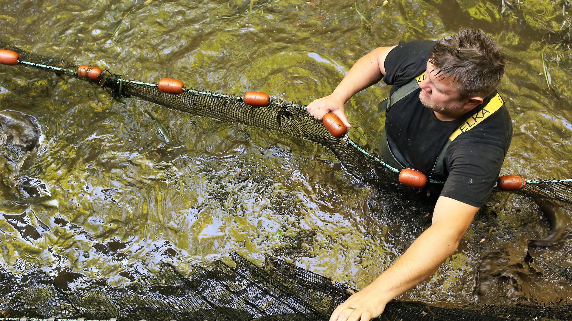 Handarbeit am Mühlkanal: Mit einem speziellen Netz werden große Fische aus dem alten Kanal gezogen.